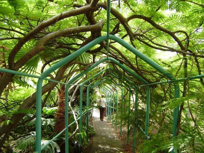 Paseo botánico.-1