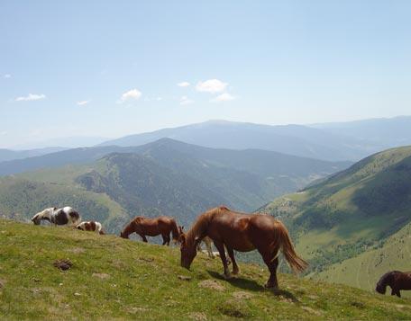 Pirineo.-2.-Vall Fosca.-caballos salvajes.-valledeayoracofrentes