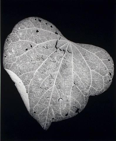 hoja.-77.-foto por Amanda Means.-1988.-Gallery 339.-Philadephia.-artnet