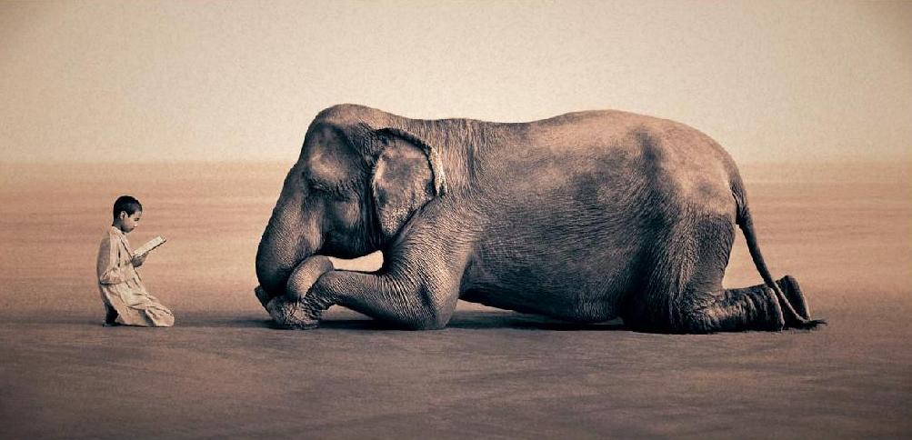 Lectura A Elefante Mi Siglo