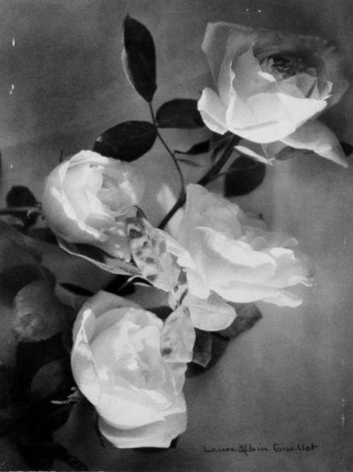 flores.-47ggg.-Laure Albin-Guillot.-rosas.-1930