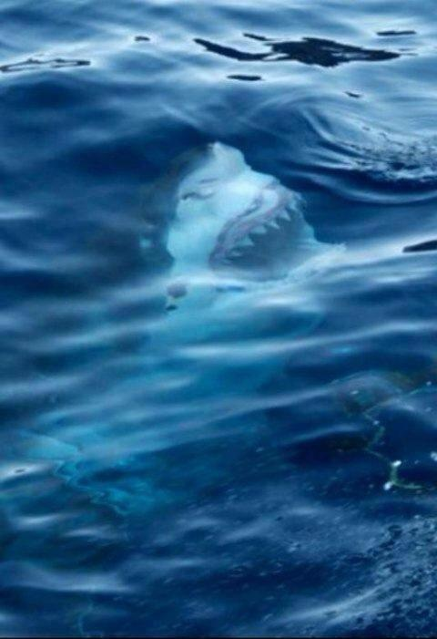 mar.-tyunn.-tiburones.-ataque del tiburón.-superpunch2 tumblr
