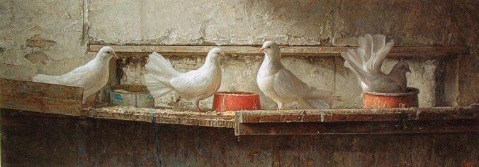 animales-t4vb-palomas-antonio-g-capel