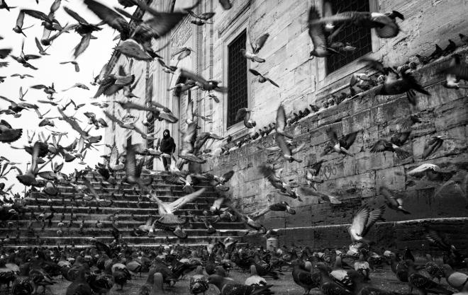 animales-tybn-palomas-chan-kin-man-palomas-en-estambul-2013